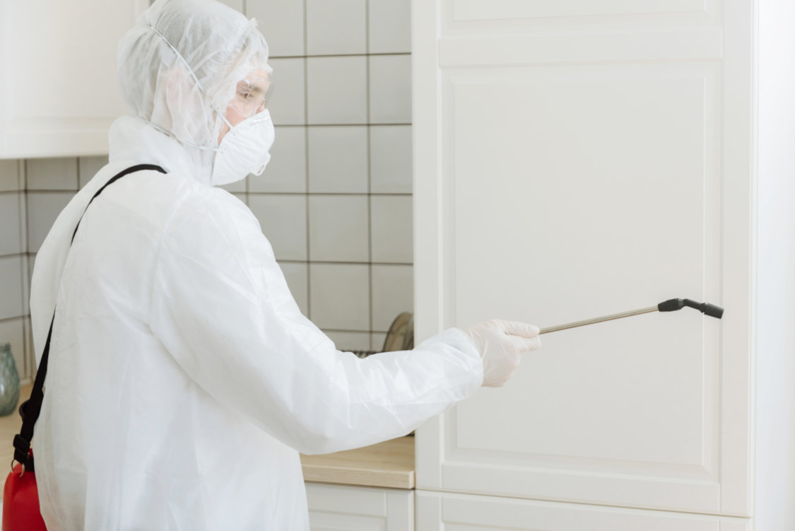 treating a wall for mould professionally