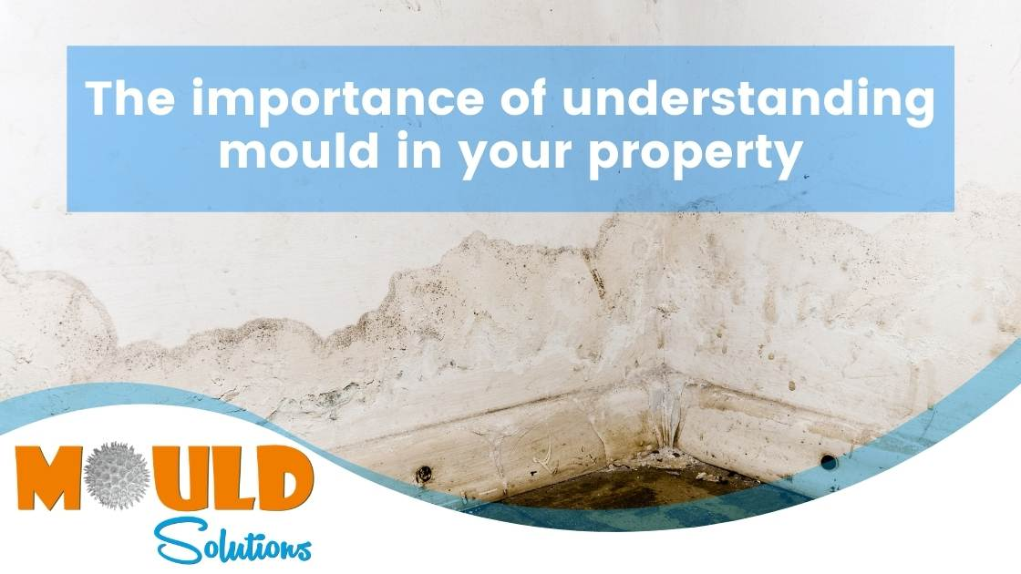 Understanding mould in property mould solutions