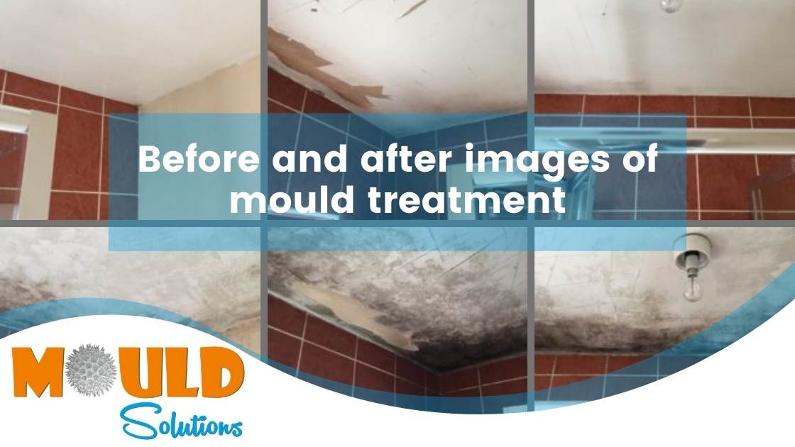 before & after treatment mould solutions