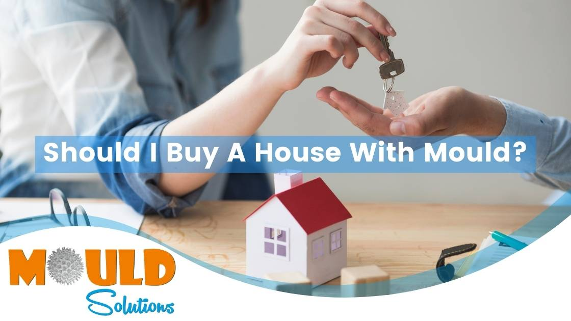 buy a house mould solutions