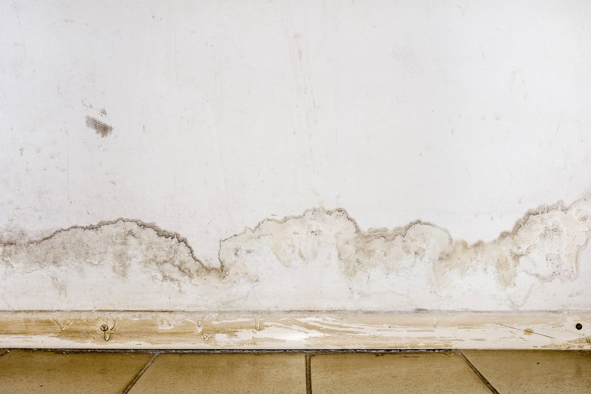 leak causing mould what is Solution